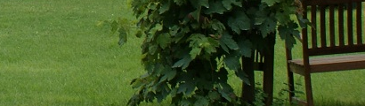 jardin-header